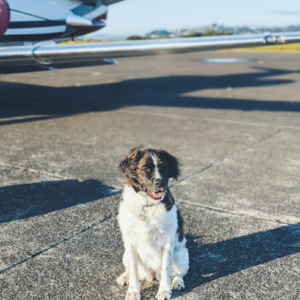 Business class with a dog - is it possible?